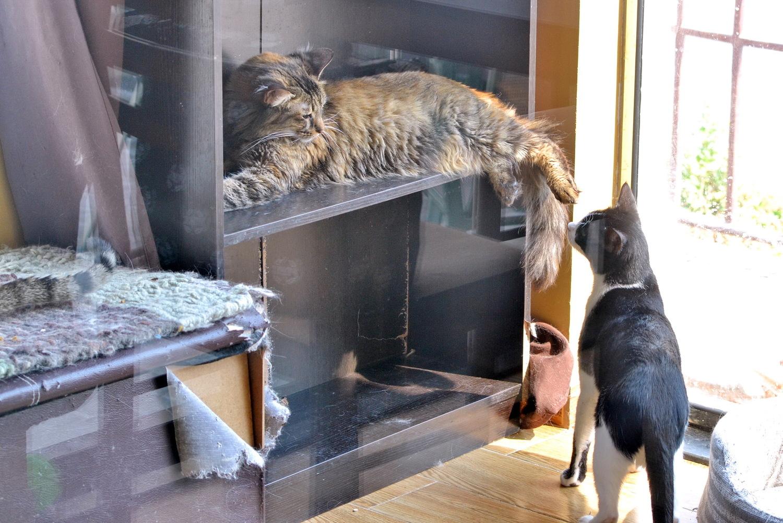 Почему чужие кошки приходят в дом