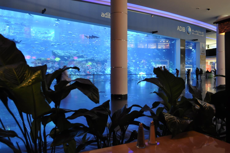 Freshwater Aquarium Fish In Dubai - Victoria lazareva feelingthelife com