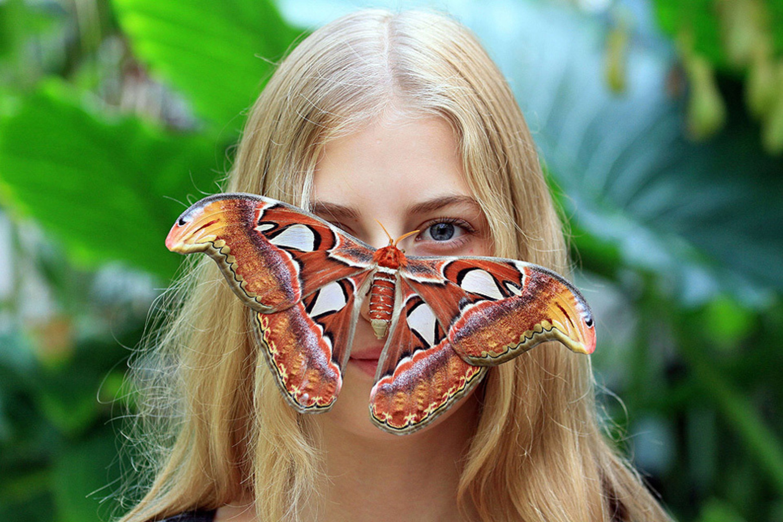 Самые красивые большие бабочки мира